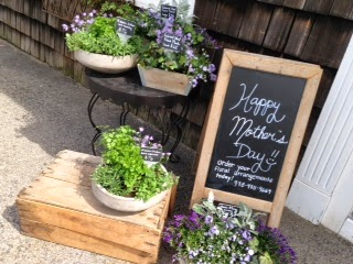les fleurs : reclaimed wooden box : outdoor spring planter : purples : campanula, ivy & dusty miller : mother's day