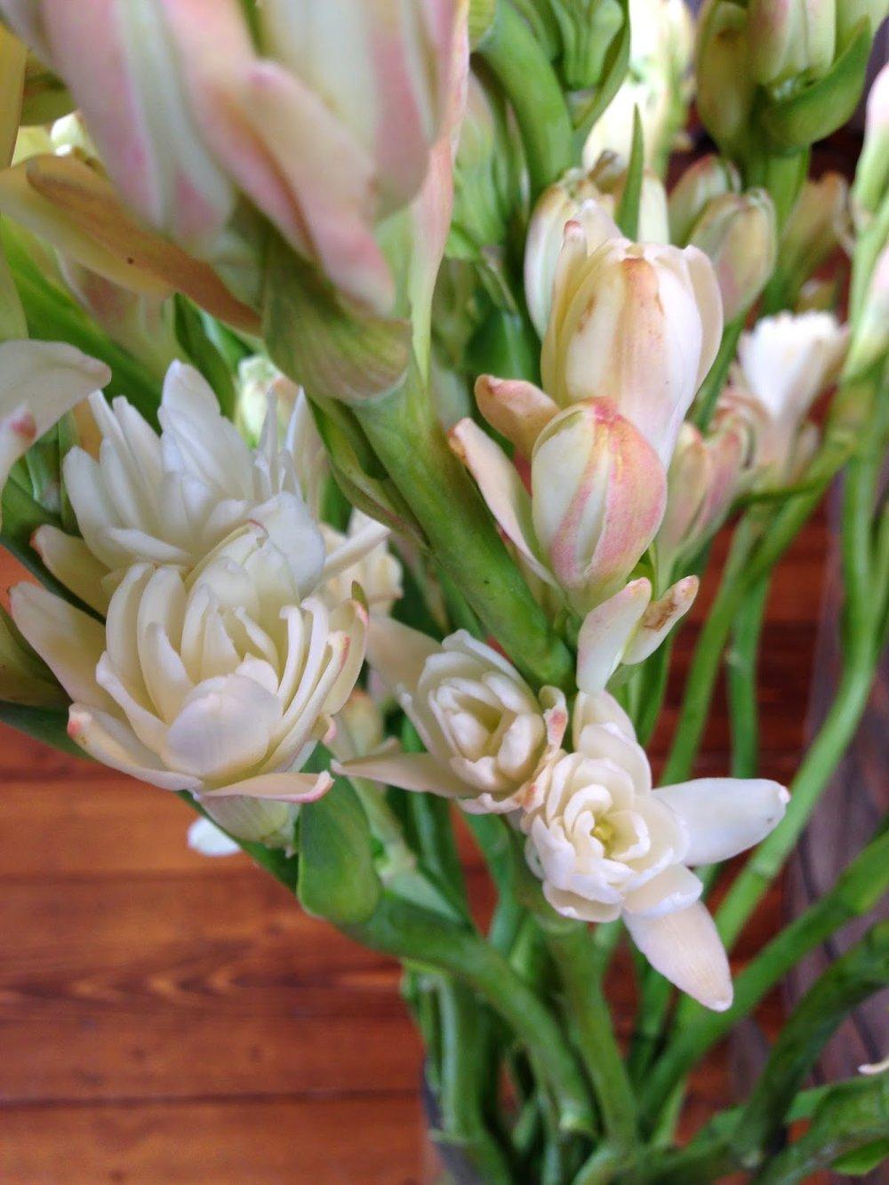 les fleurs : tuberose : champagne/ivory summer blooms