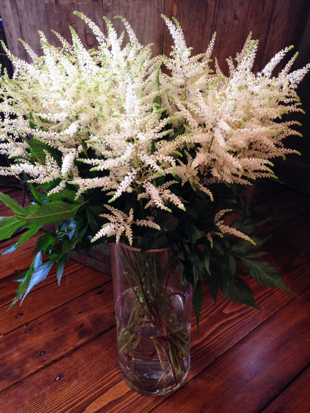 white astilbe : flower of the week : les fleurs : andover florist