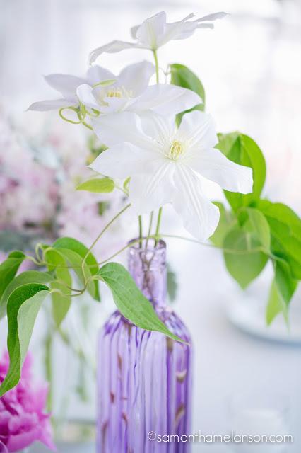 white clematis in purple glass bottle : les fleurs : fruitlands museum : samatha melanson photography