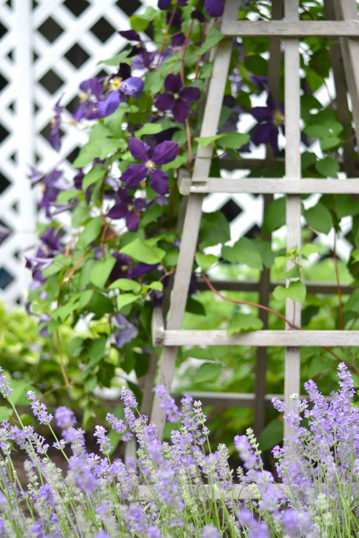 les-fleurs-home-gardening-plantings-benefits.jpg