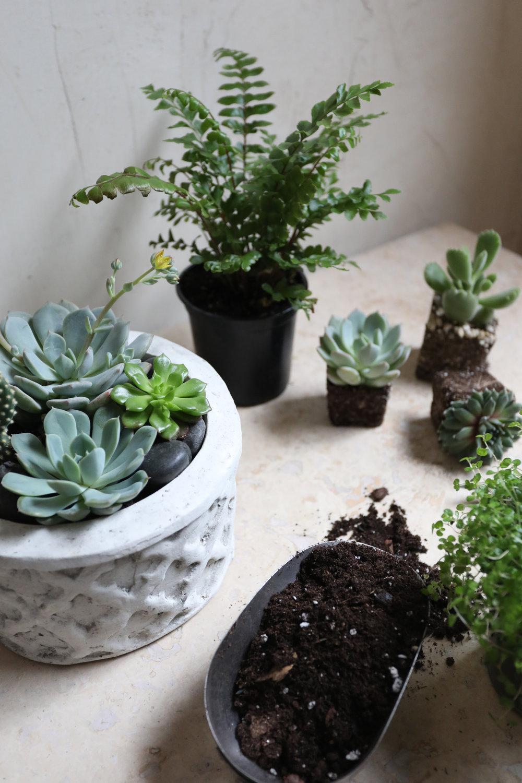 les fleurs summer indoor plant outdoor plant sale