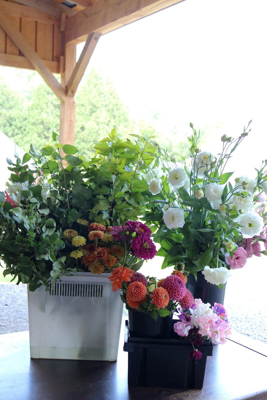Sandra-Les-Fleurs-Liz-Krieg-Flower-Farm-Interview (27).jpg