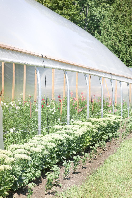 sandra-lesfleurs-tours-maple-flower-farm-sedum.jpg
