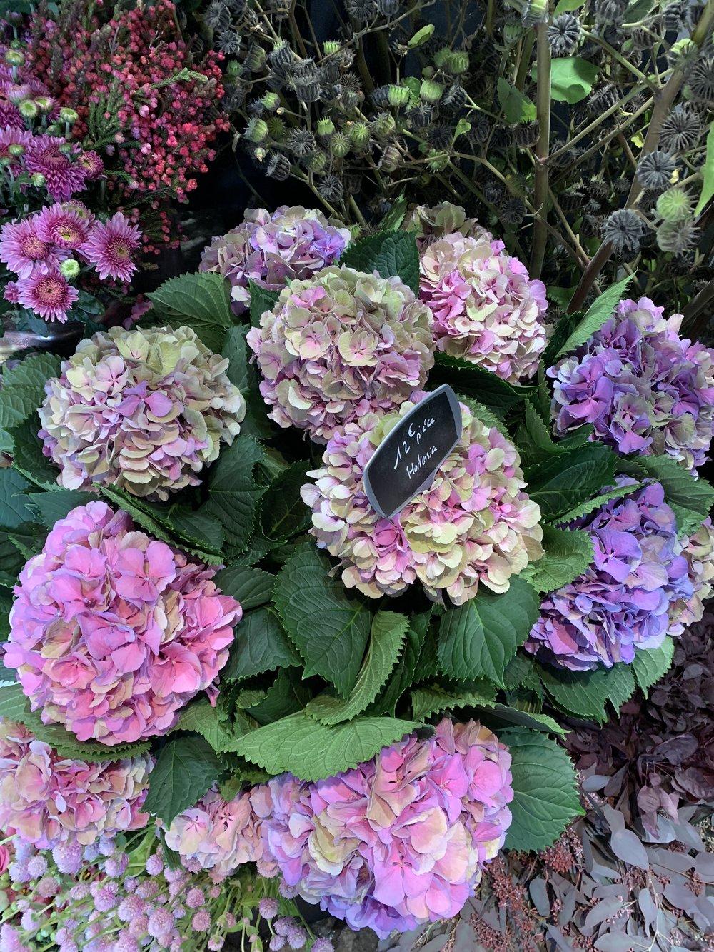 Parisian-florist-hydrangea-pink-purple.jpg