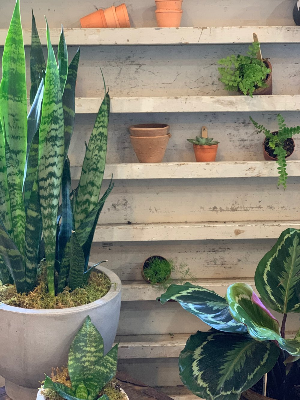 best-indoor-house-plants (1).jpg