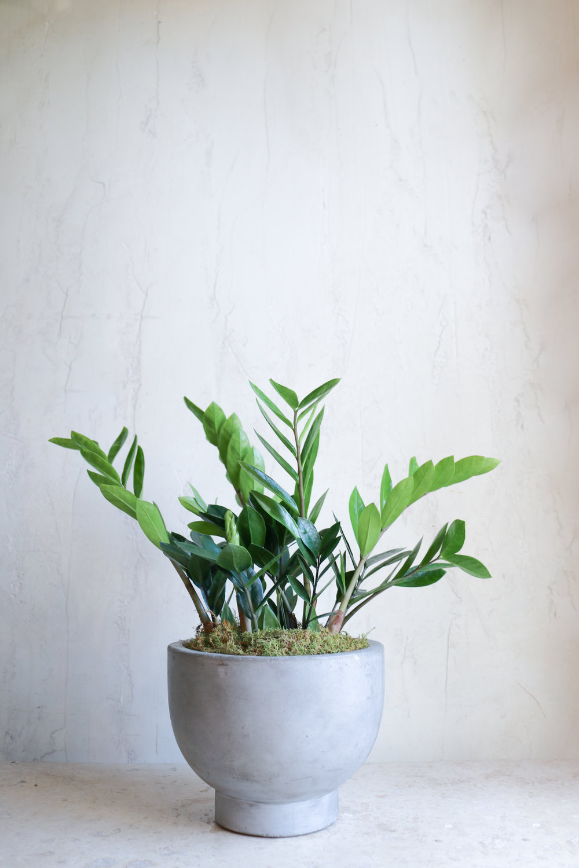 plante-verte (2).jpg