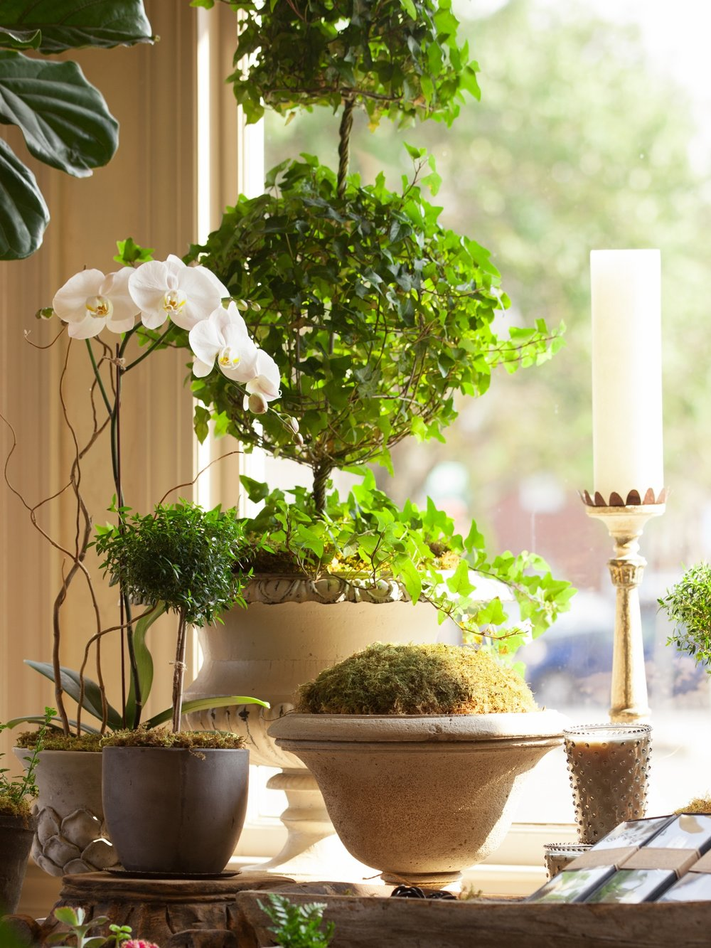 ivy-topiary-orchid-lesfleurs-house-plants.jpg