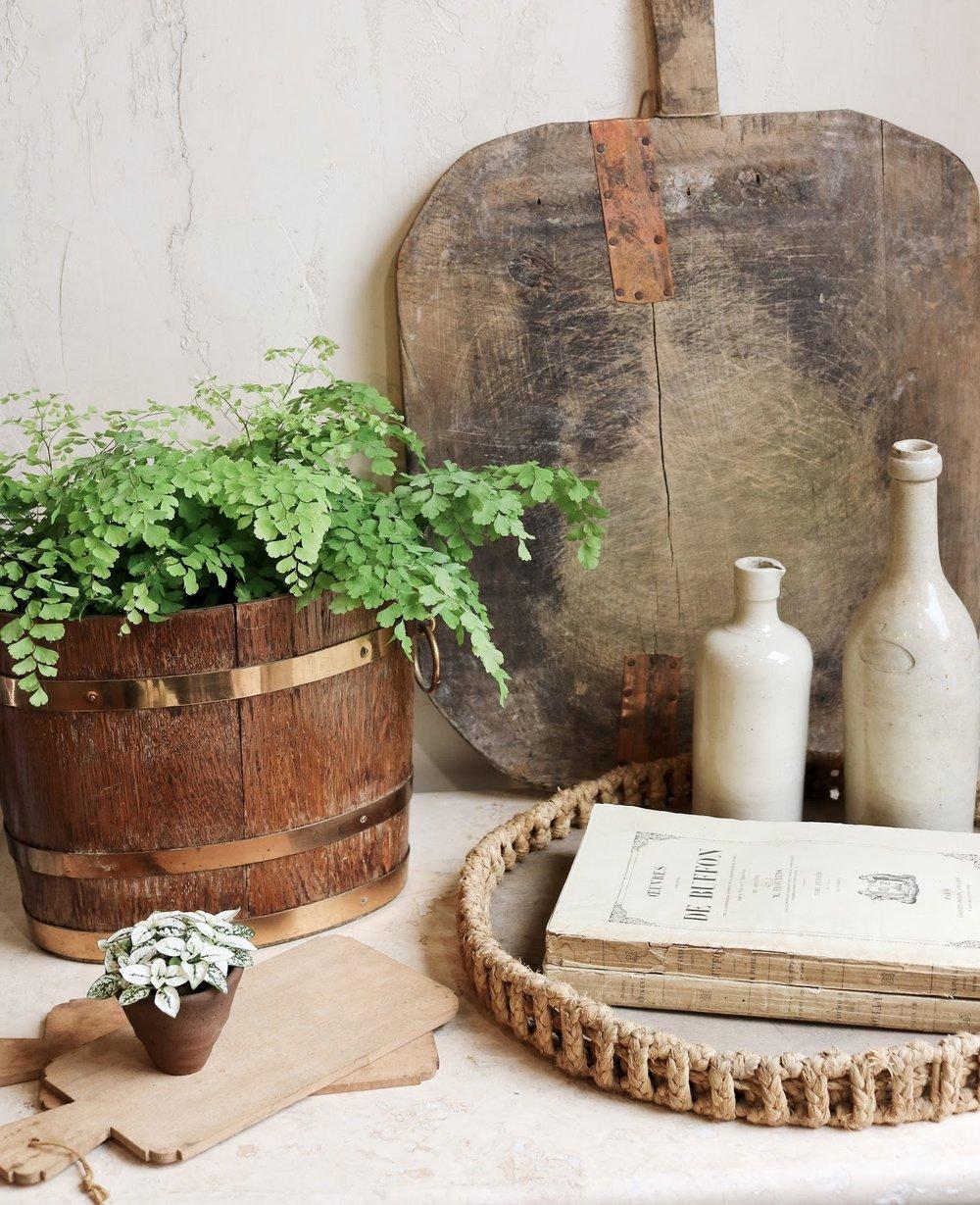 indoor-plants-lesfleurs+%282%29.jpg
