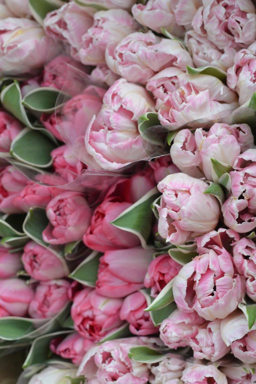 pink-parrot-tulips-bouquet.jpg