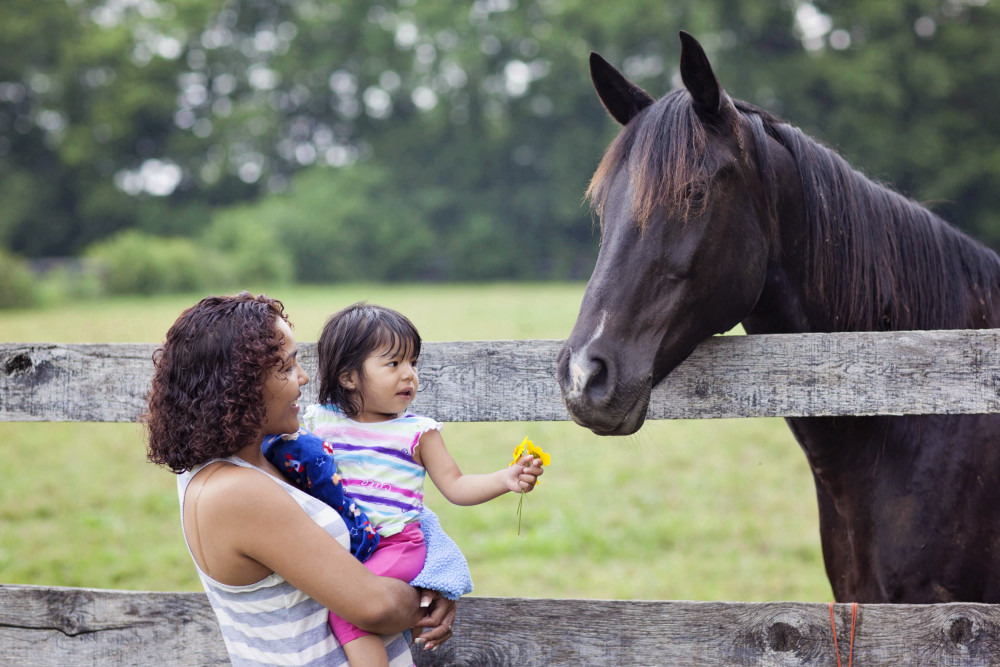 GreenHouse17 Family Horse.jpg