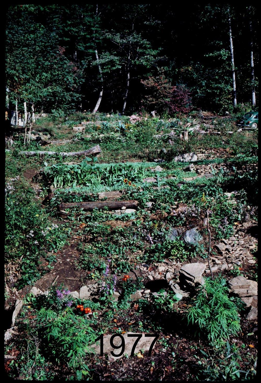 1975 veg terr to yurt.jpg