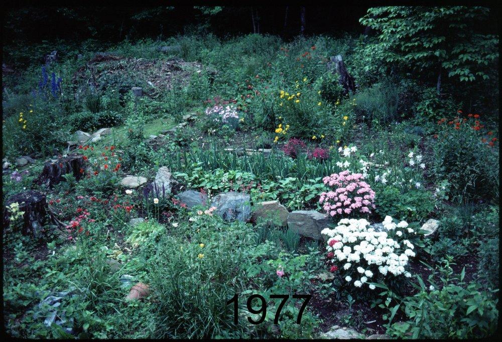 1976 flowers nr drive.jpg