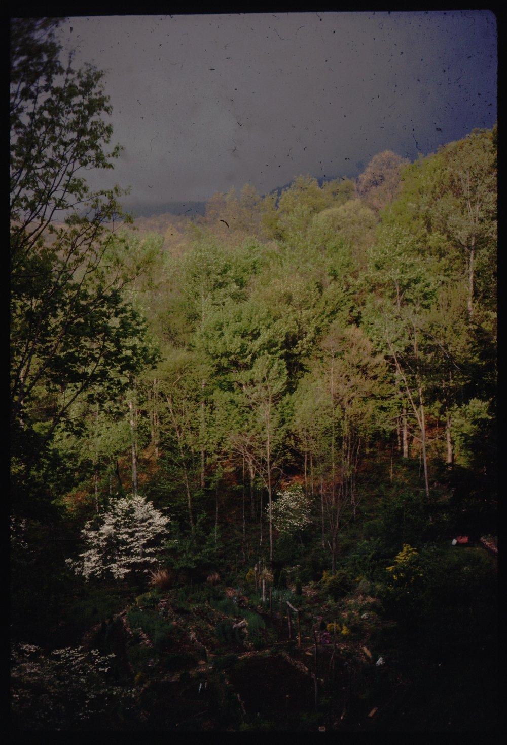 1976 gdn view.jpg