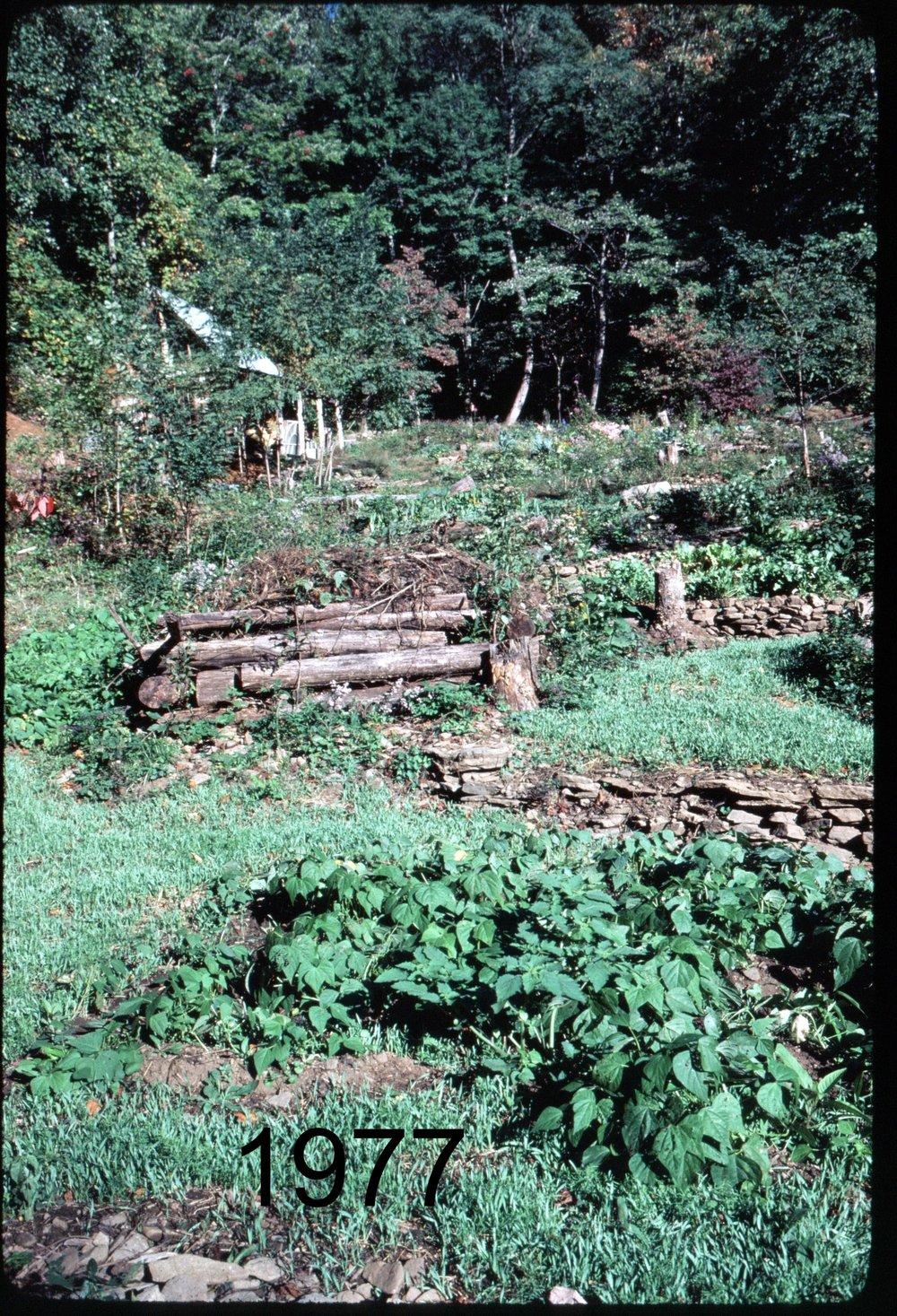1976 veggdn - cabin.jpg