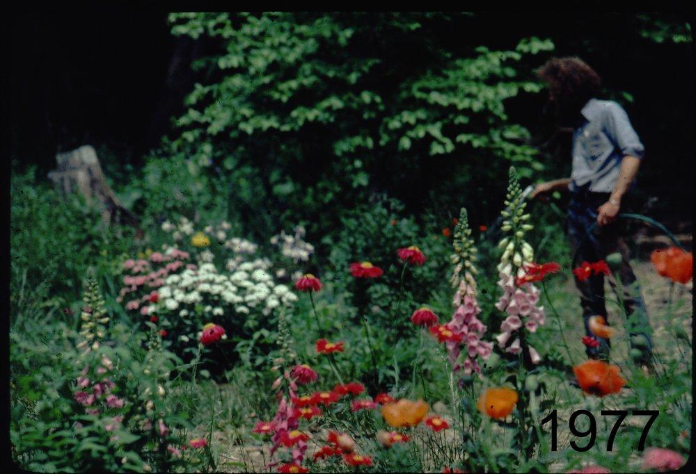 1977 joe watering flowers.jpg