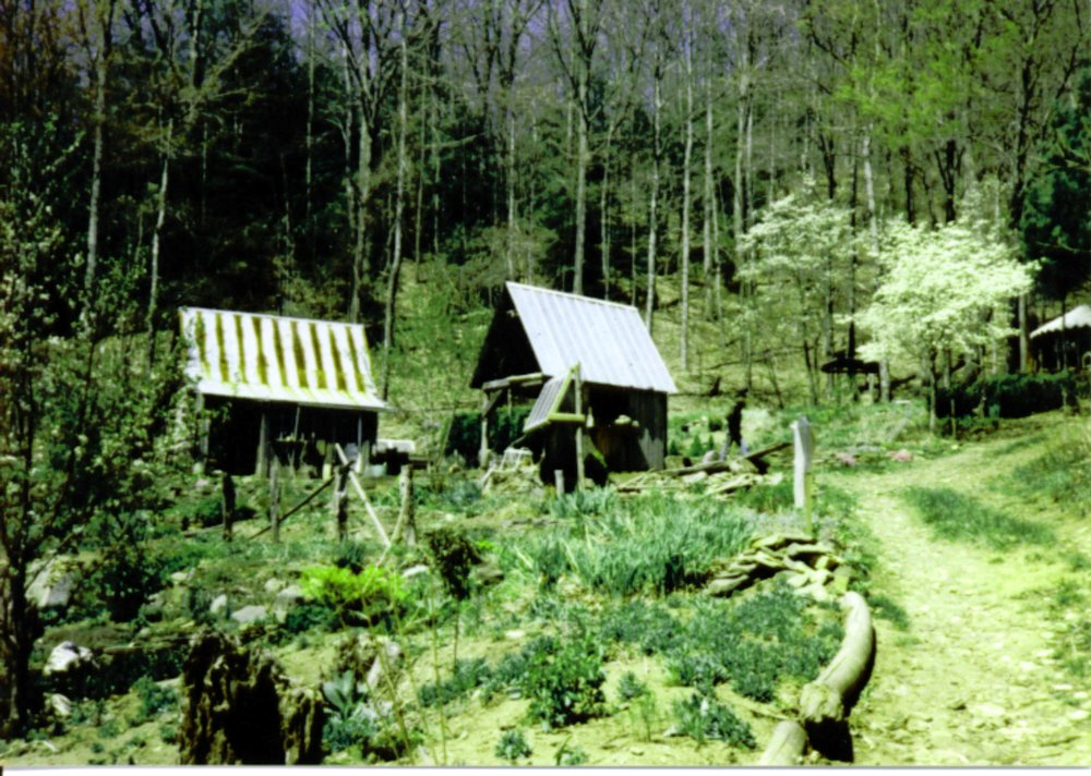 1984 shed w solar panels, cabin.JPG