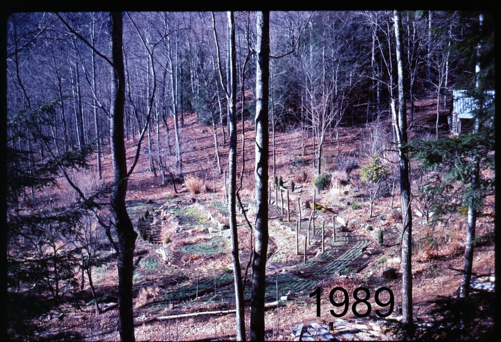 1989 gdn overview from house.jpg
