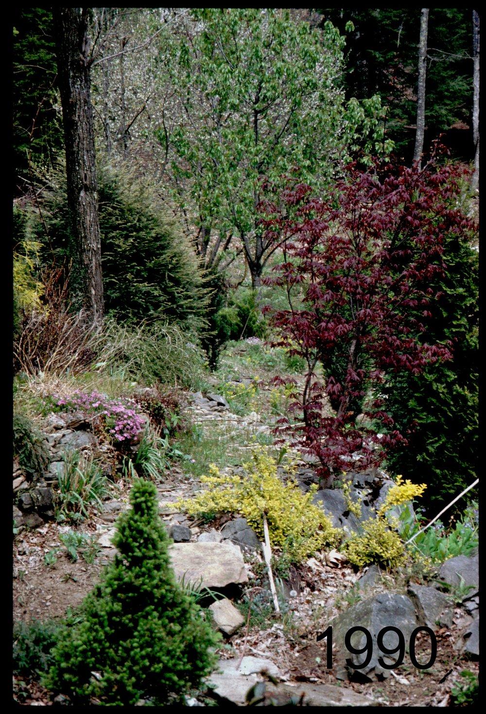 1990 crimson maple area.jpg