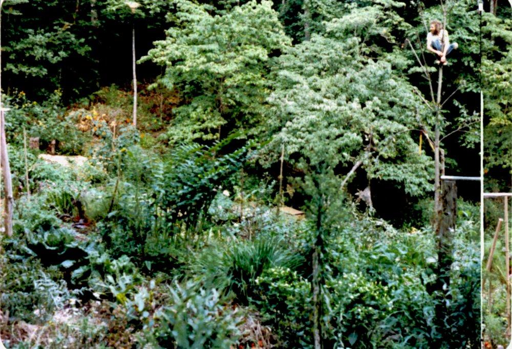 1990 joe in tree.JPG