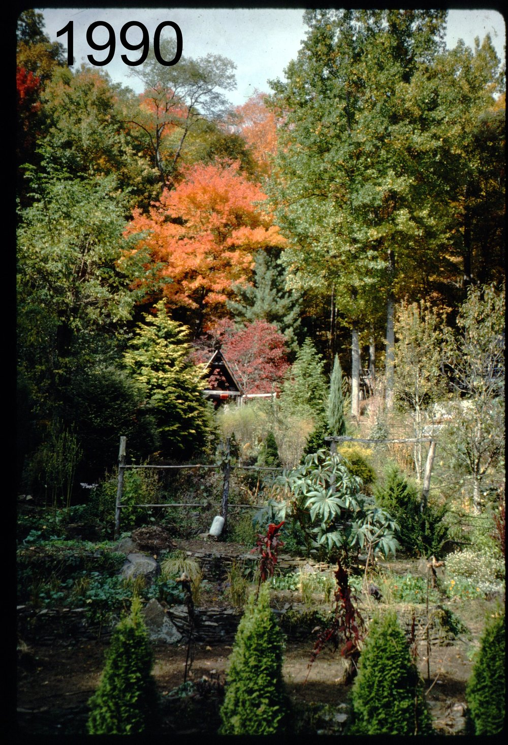 1993 view N from coop.jpg