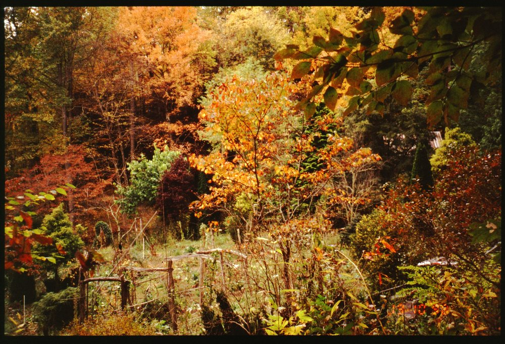 2001 house - gdn autumn.jpg