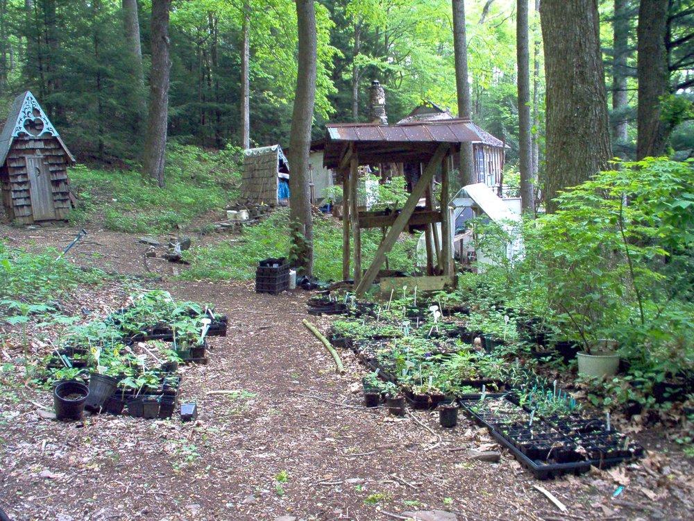 2004 shade nursery.JPG