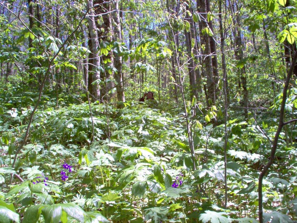 2004 spring wildcrafting 1.JPG