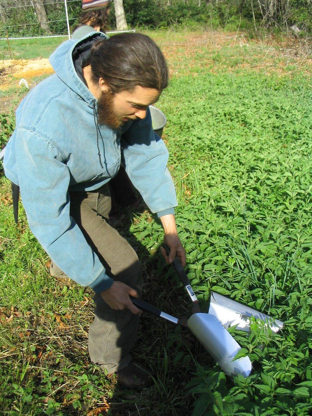 nettle harvest.jpg