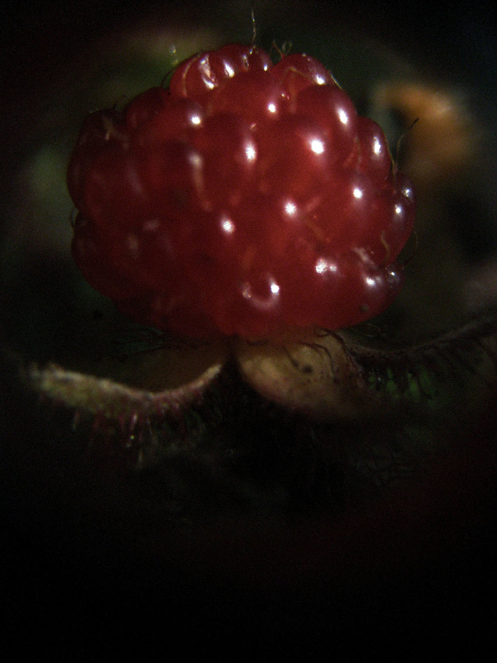 wineberry.jpg
