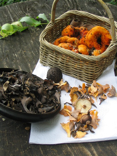 mushroom3.jpg