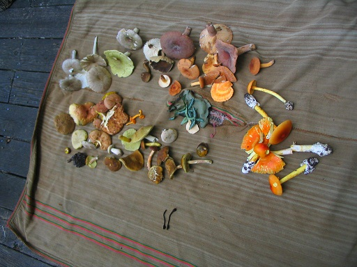mushroom5.jpg