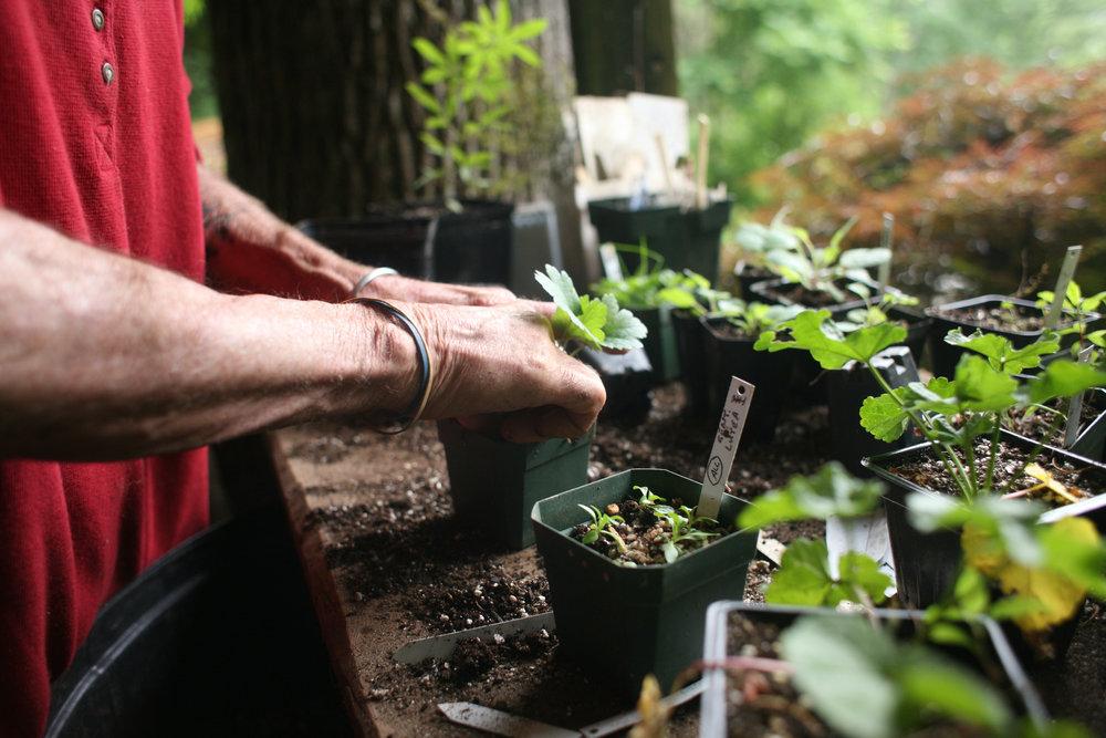 Joe potting plants. Photo by Brynn Anderson, 2009