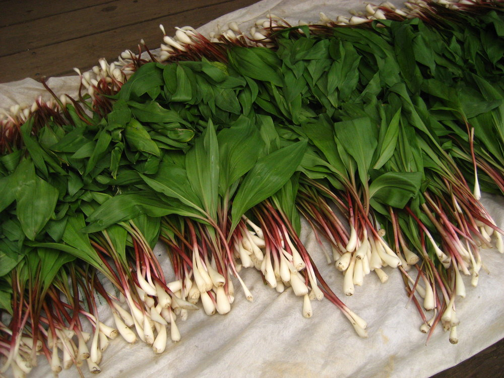 Ramps ethically harvested by leaving the roots in the ground.