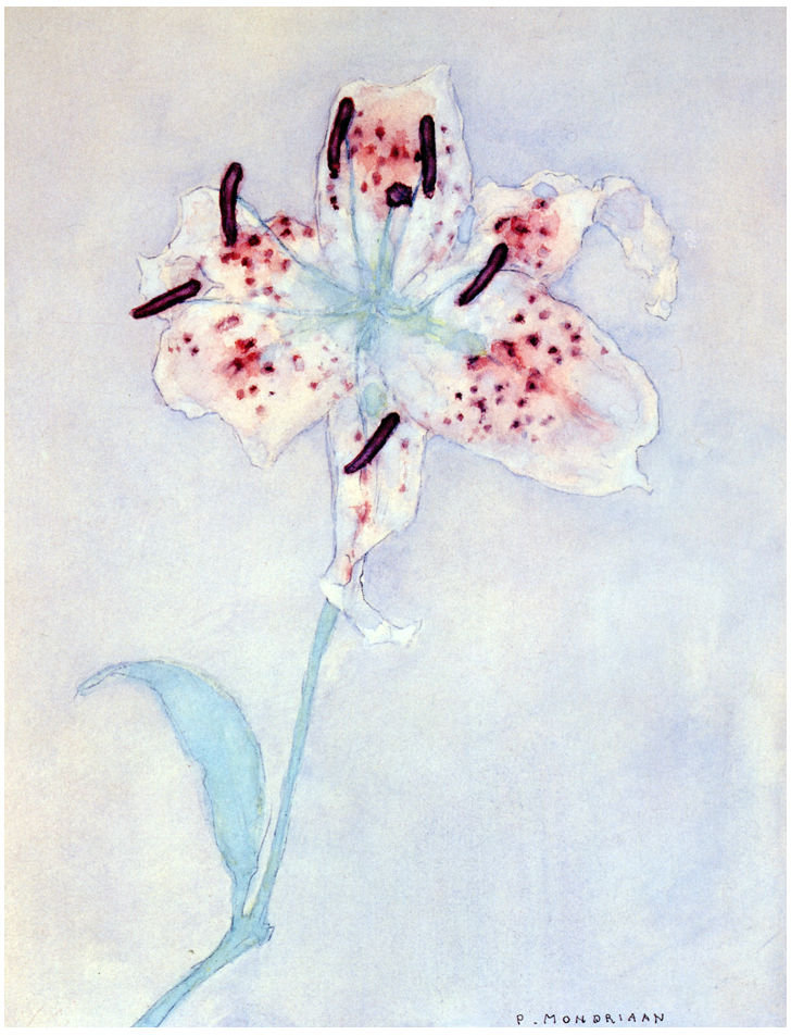 Lily by Piet Mondrian