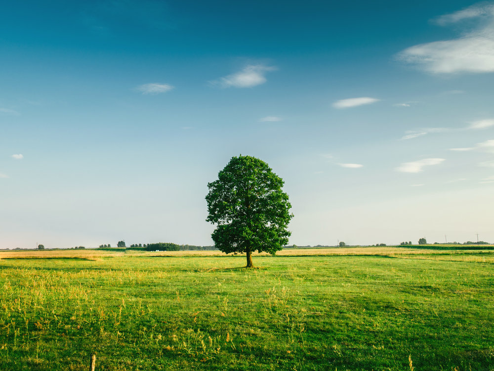 tree-field-horizon-countryside-81413.jpeg