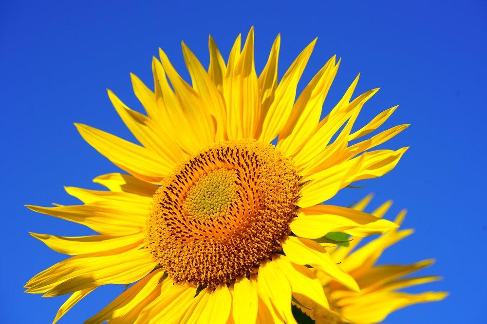 beautiful-bloom-blossom-541484.jpg