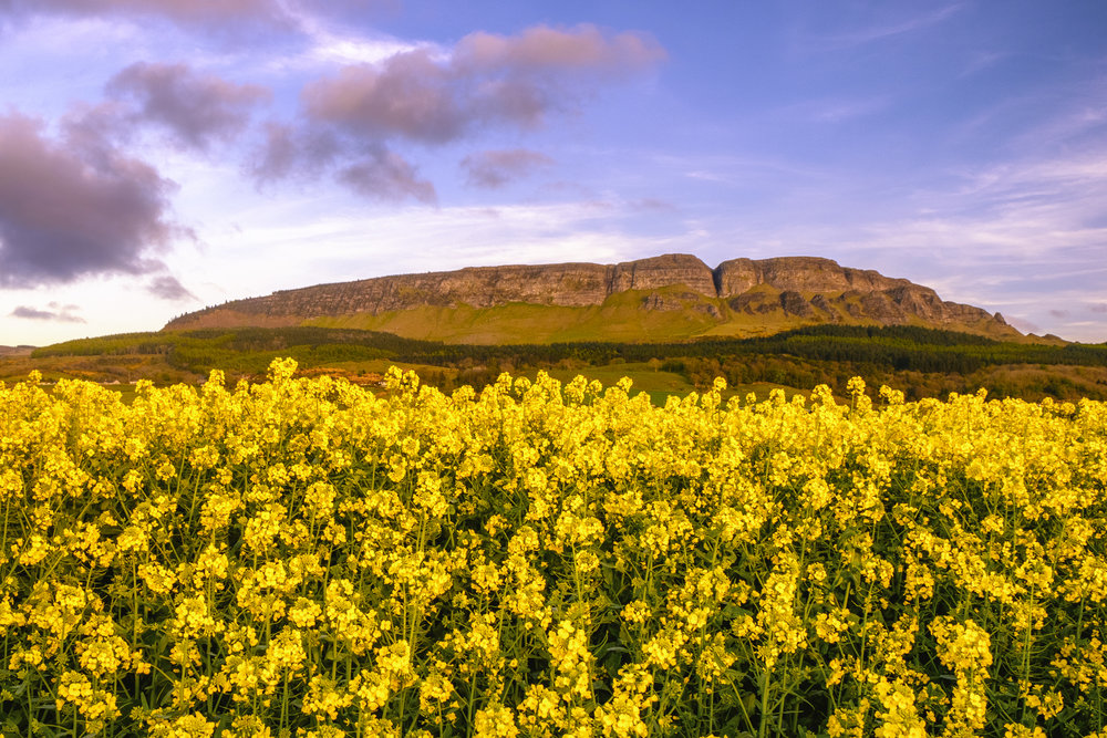 Yellow Fields, Binevenagh