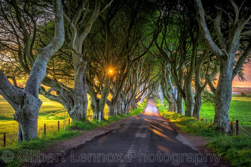The Dark Hedges Northern Ireland Sunrise by Gilbert Lennox