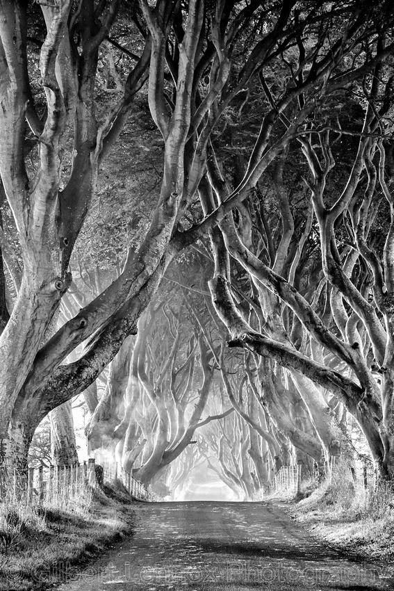 The Dark Hedges Black and White