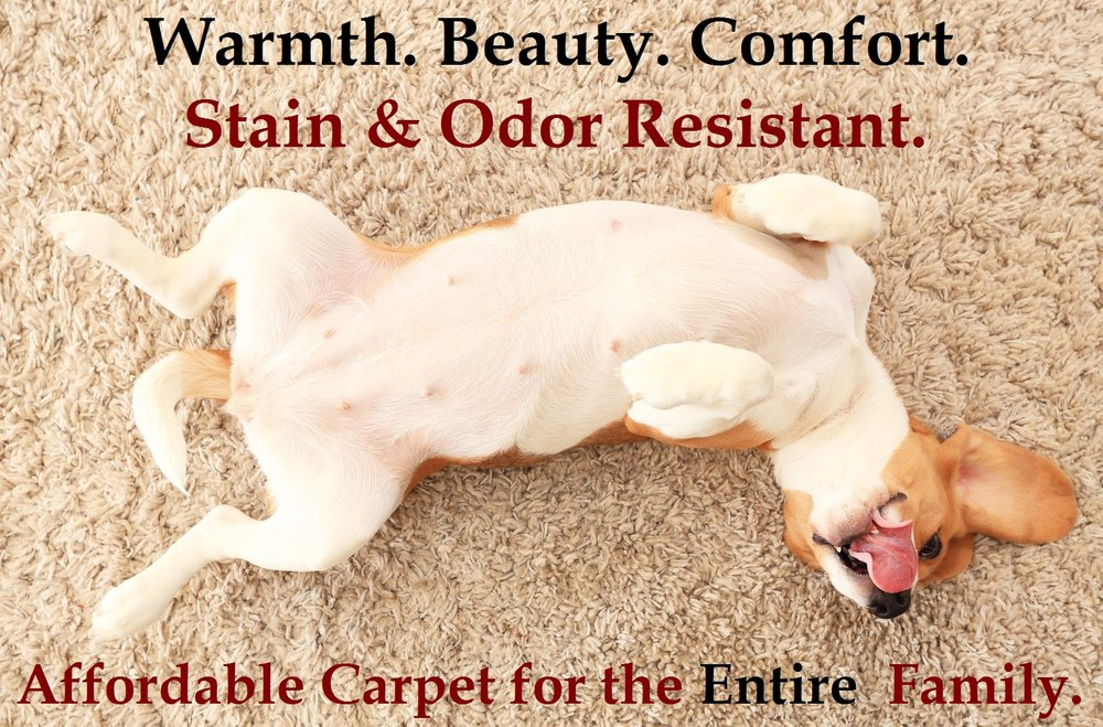 carpet ad dog.jpg