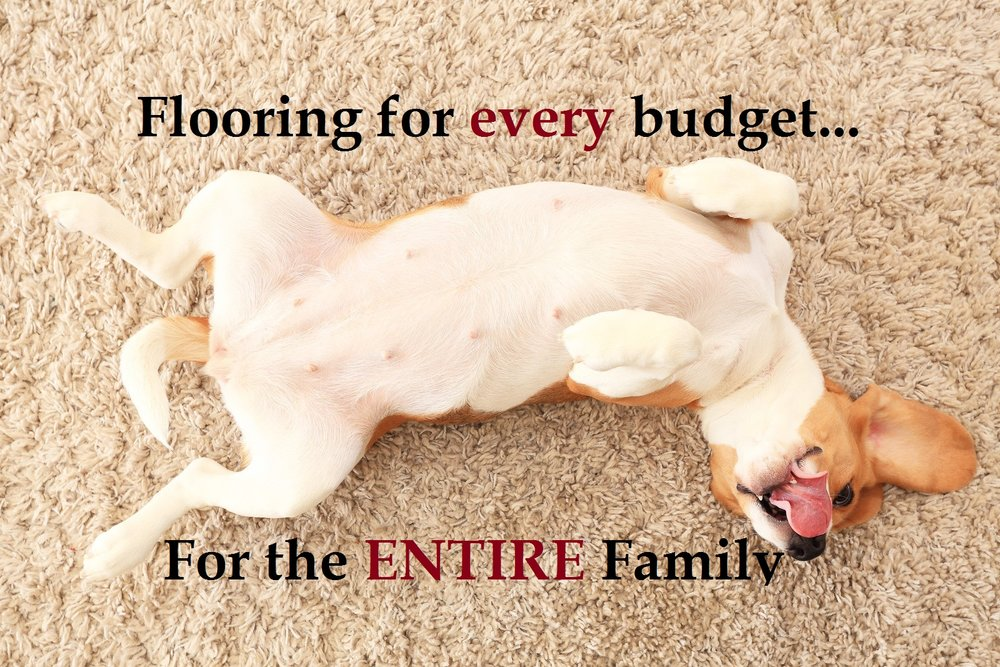 dog on carpet pics for website.jpg