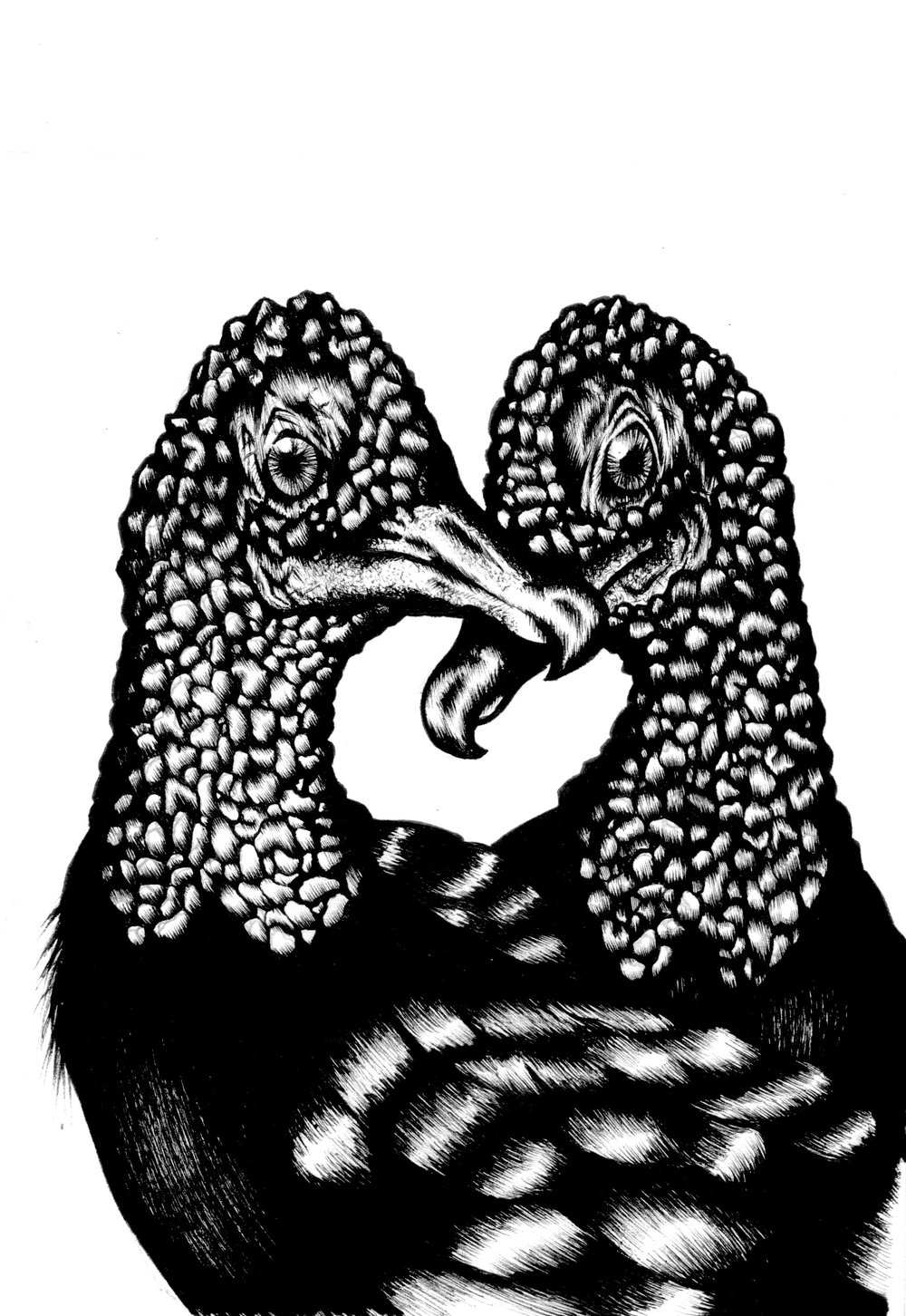 Black Vultures  (2016)  Birds that Stay Together, Forever   Ink