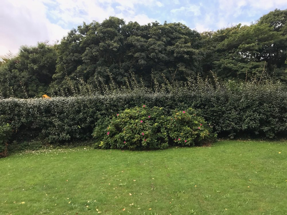 Hedge  b4.jpg