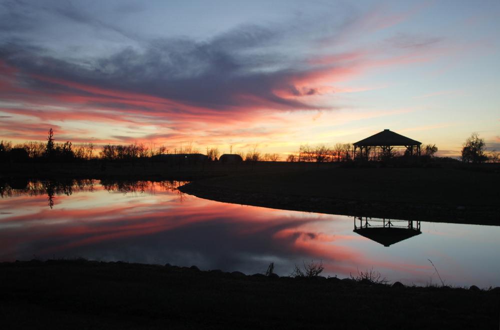 Sunset Arboretum.jpg