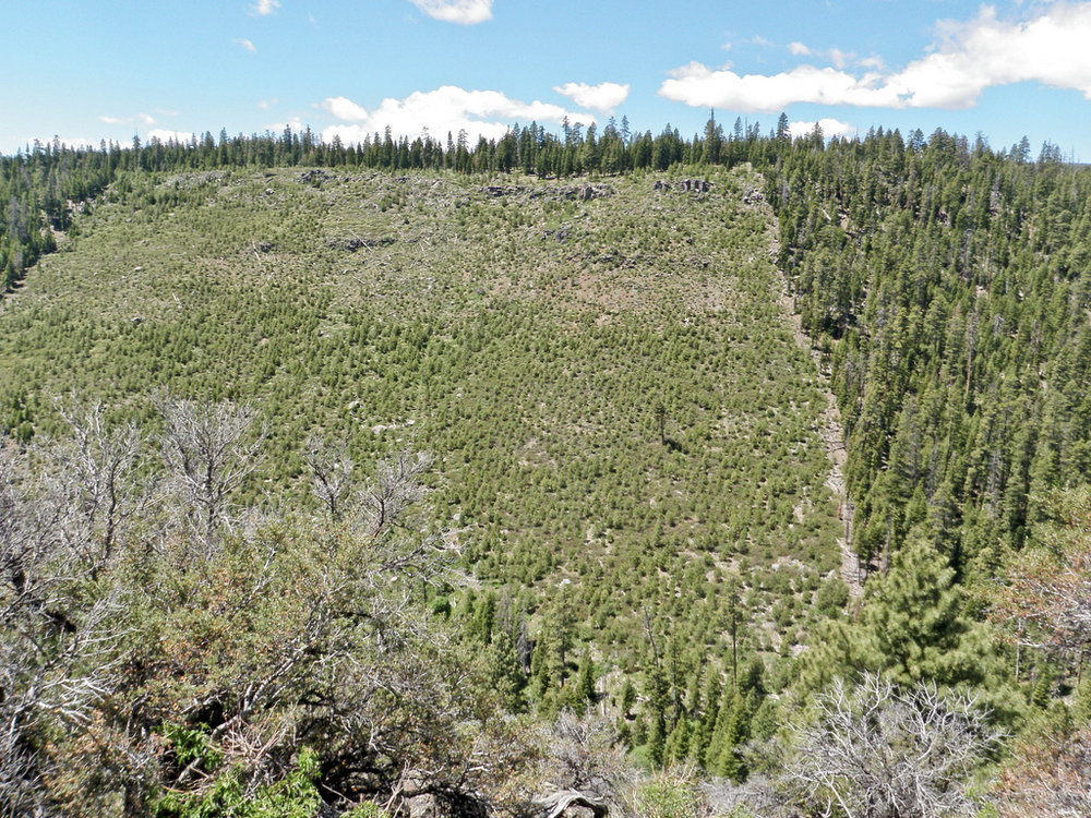 Clear cut in Oregon's Fremont National Forest. Source: Michael McCullough via Flickr/CC BY 2.0