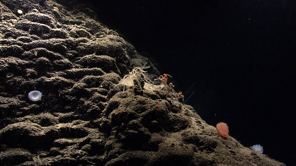 Northeast Canyons and Seamounts