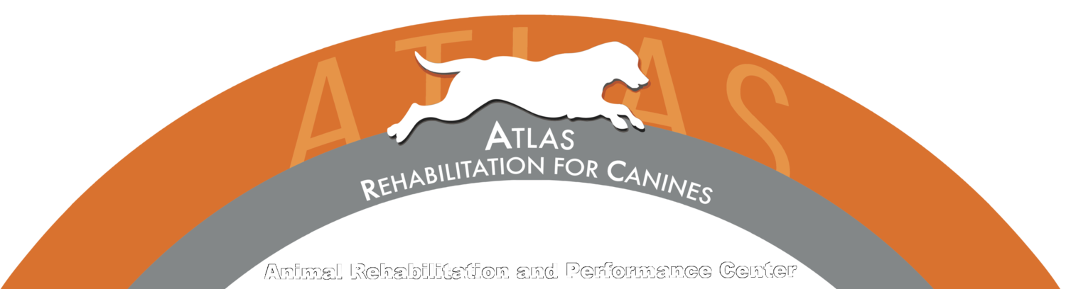 Atlas Rehabilitation for Canines