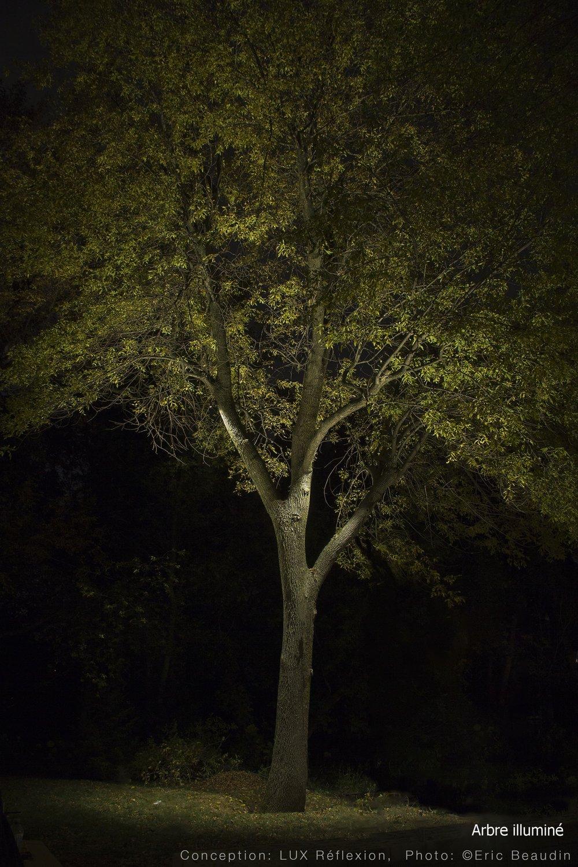 Éclairage paysager, arbre mature