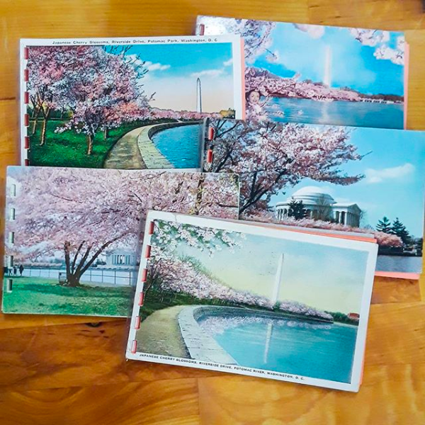 Vintage cherry blossom postcard notepads found at Analog!